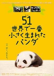 大熊猫51的故事