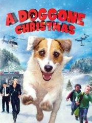 狗狗圣诞节