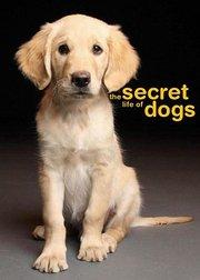 狗的秘密生活