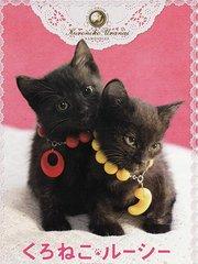 黑猫露西电影版