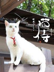 猫侍第1季
