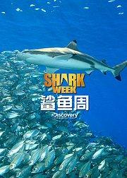 鲨鱼周2016