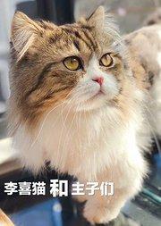 李喜猫晒猫大会
