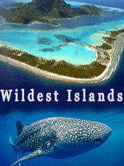 岛屿野生大地