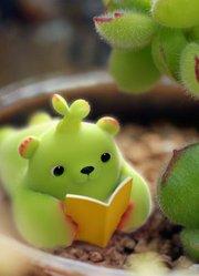萌芽熊童子 第1集 惊 我家养的小植物竟然活了