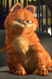 加菲猫合集