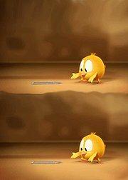 小鸡JAKI在哪