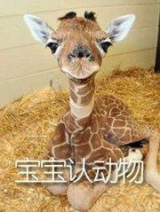 宝宝认动物