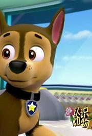 第3季认识动物:小狗