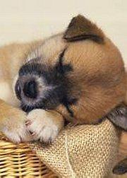 超可爱的睡睡狗狗