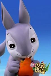 第3季认识动物:兔子