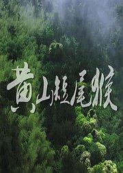 黄山短尾猴