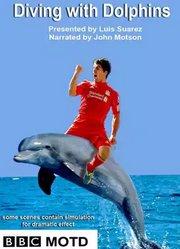 与海豚一起潜水