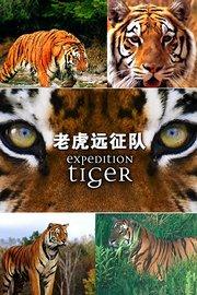 老虎远征队
