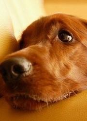 禁狗令遭质疑:请善待人类的朋友
