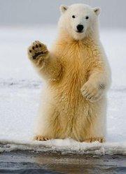 BBC:探寻北极熊(预告)