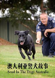 澳大利亚警犬故事