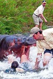野兽袭击人类恐怖画面