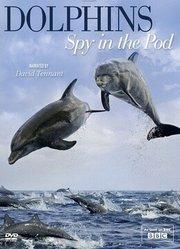 BBC:卧底海豚帮