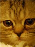动物也会哭么?