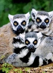 绝地生存高手:马达加斯加
