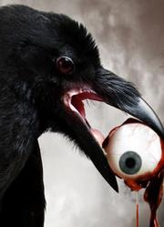 乌鸦怎会如此妖孽