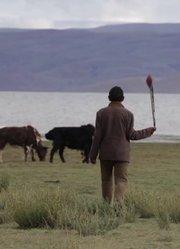 这里是西藏 快乐牧民(英文版)