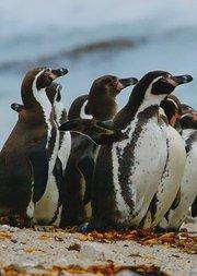 动物园:认识企鹅