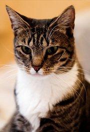 岩合光昭的猫步走世界:乌拉圭