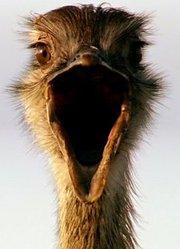 BBC:爱登堡的巨鸟