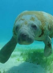 自然世界:波多黎各岛的魅力