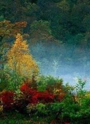 世界六大森林