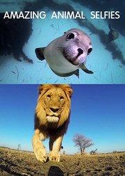 隐藏动物摄像机