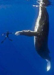 BBC:与鲸鱼一起潜水