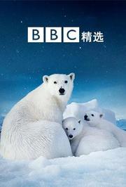 BBC精选