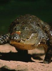 黏糊糊的沼泽猛兽