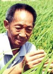 朱丹三亚寻访袁隆平 梦想亩产一千公斤