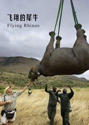飞翔的犀牛