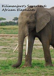 乞力马扎罗山的超级英雄:非洲大象