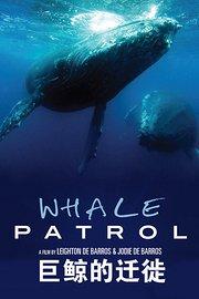 巨鲸的迁徙