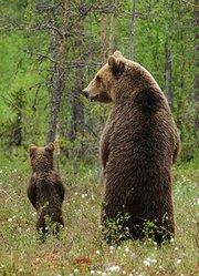 BBC:动物超级父母