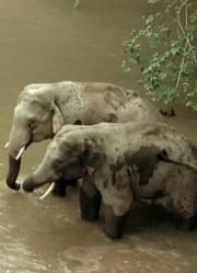 亚洲象的家园
