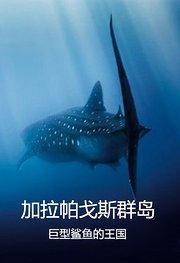 加拉帕戈斯群岛:巨大鲨鱼王国