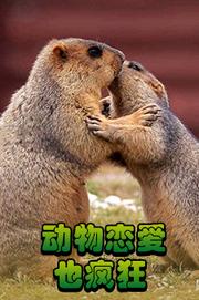 动物恋爱也疯狂