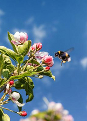 大黄蜂的秘密