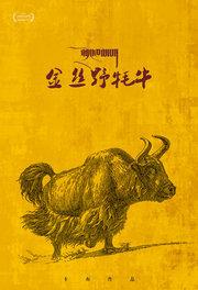 金丝野牦牛