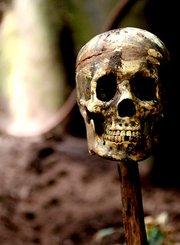 人类起源之谜:探究骨骼
