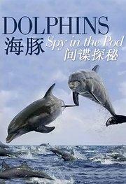 海豚:间谍探秘