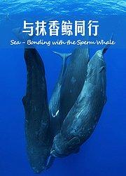 加勒比海:与抹香鲸同行