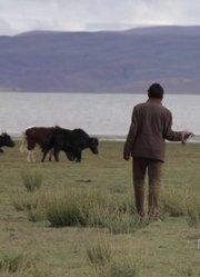 这里是西藏 快乐牧民